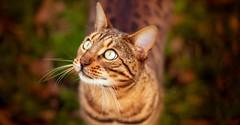 Point of VIew (Arnez_) Tags: cats pets portrait