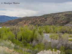 Utah Landscape (moelynphotos) Tags: landscape mountain tree overcast scenicsnature bodyofwater flora northamerica plant river usa utah water westernusa moelynphotos