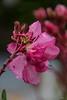 Spiegelung im Tropfen (adirnbauer) Tags: 2018 80d blumen canon eos lr6 lightroom sauerbrunn wassertropfen flowers oleander