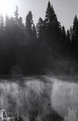 family of ducks on a morning pond, Yosemite (carlfieler) Tags: ducks pond mist fog landscape 35mmfilm analog canona1 canonfd fd55mm12 yosemite california