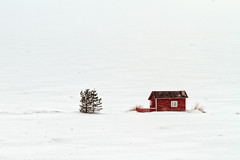 Little Red Hut In A Snow Storm (k009034) Tags: 500px winter copy space finland kalajoki scandinavia tranquil scene beach cold coldness freezing green hut ice no people pine red sea seasons snow storm snowfall travel destinations tree weather wind window frozen temperature blizzard frost snowing snowdrift water teamcanon copyspace tranquilscene nopeople snowstorm traveldestinations