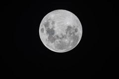 Blue Moon (Merrillie) Tags: astrology fullmoon luna celestial bluemoon night space universe sky moon nighttime round planetary lunar