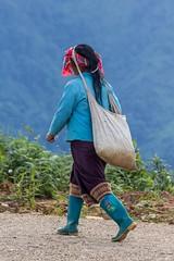 Dnešní čajová várka sklizená (zcesty) Tags: laos2 domorodci phongsali laos dosvěta phôngsali phongsalyprovince la