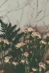 Easter Flowers (flashfix) Tags: april012018 2018inphotos ottawa ontario canada nikond7100 40mm nikon flashfix flashfixphotography flowers floral flora carnations easter spring stilllife