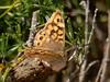 Hora de almoço (LuPan59) Tags: lupan59 oeiras fauna borboletas insectos