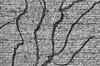 wonky shadows (Francis Mansell) Tags: plant bush shrub branch stem kew shadow wire kewgardens royalbotanicgardenskew monochrome blackwhite niksilverefexpro2 wall brick