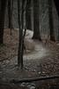 easter sunday 2018 umstead park 14 (furrycelt) Tags: nikon85mmf14afd nikon85mmf14 northcarolina umsteadstatepark beechleaves beechtree eastersunday ianwilson jianwilson photographersoftumblr 85mm d600 nikon raleigh umstead beech forest furrycelt lensblr marcescent natural nature path trees woods