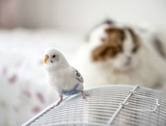 My home gang (Varvara_R) Tags: pets pet fun parrot bird cat interaction communication sweethome