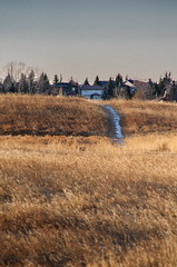 Early Winter Nose Hill Scene (Bracus Triticum) Tags: early winter nose hill scene calgary カルガリー アルバータ州 alberta canada カナダ 12月 december 2017 平成29年 じゅうにがつ 十二月 jūnigatsu 師走 shiwasu priestsrun