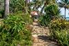Along the Garden Path (AaronP65 - Thnx for over 12 million views) Tags: brisassierramar santiago cuba