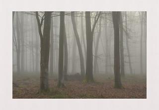 Madehurst Mist