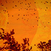 Flying in the Sunset (soniaadammurray - On & Off) Tags: digitalphotography manipulated experimental collage abstract nature birds sky trees sunset fly springingintoaprilcontest orange beauty skyscape