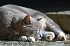 ねこ (katsuzin13) Tags: kanagawa fujisawa enoshima beach 神奈川 藤沢 江ノ島 ねこ ネコ 猫 cat