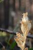 DSC_9462 (sevbette) Tags: лес осень чудесаприроды