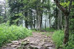 Relais du mont du chat (kdb²) Tags: forest forêt arbres trees cloudy cloud nuage aixlesbains bourget dentduchat lacdubourget montagne moutain lac french français canon eos pierres rocks herbe dent chat savoie