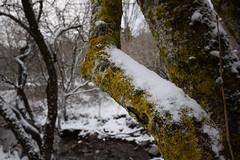 Nieve y Líquenes (Hachimaki123) Tags: liquen santafe santafedelmontseny parcnaturaldelmontseny montseny