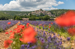First days of Lavender in Provence (E.K.111) Tags: flowers lavender provence france nature historicalplaces