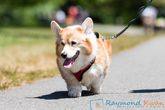 2018Furry5K_600_5648 (Raymond Kwan Photography) Tags: furry5k animal shelter dog puppy charity sewardpark 2018 5k run furry
