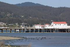 IMG_2463 (armadil) Tags: mavericks beach beaches bird birds flying californiabeaches heron greatblueheron blueheron