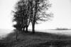 Mere modlys (holtelars) Tags: asahi pentax spotmatic spotmaticii spii smctakumar takumar 24mm f35 film 35mm analog analogue ilford fp4 ilfordfp4 100iso xtol bw blackandwhite monochrome filmphotography filmforever ishootfilm larsholte homeprocessing landscape kokkedal denmark danmark winter trees field flare backlit