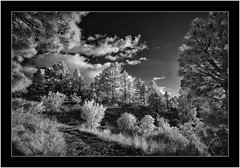 La Palma, Sony A7 IR, Nikkor 18mm/3.5 (Bartonio) Tags: 720nm bw blanconegro canaryislands clouds garafía infrared ir islascanarias lapalma landscape modified monochrome naturaleza nature nikkor18mm35 nubes paisaje pinar pine pino sonya7ir tree