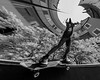 Inverted Fisheye (BielePix) Tags: slt 58 sony sonyalpha sonyalphadslr slr sonyalpha58 sonyalphaslt58 spiegelreflexkamera spiegelreflex reflex camera dslr bielefeld germany deutschland nrw ostwestfalen hobbyfotograf amateurphotographer sport actionsport adrenaline sports action outdoor black white schwarz weis einfarbig bw monochrome mono street strase alltag life leben live personen people skateboardingintl skatelove skatelife skatephotography skateboard skate skatephotos skater photoshop composing digitalart postproduction bearbeitung edit lightroom filter nik collection alienskin photography art fotografie