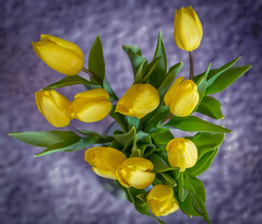 Ten Tulips (Pejasar) Tags: digitalcreations painterly tulips ten yellow blossoms group blooms vibrant color art artistic