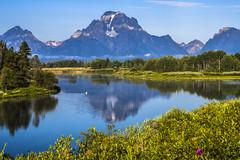 Mount Moran with pelican, Grand Teton NP (birgitmischewski) Tags: pelican oxbowbend grandtetonnp mountmoran reflection