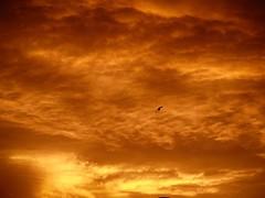 Bird, Sunset (voyageurrr) Tags: oro or gold bird oiseau voletaria ptak fly flying vol vluig полет volando птица небо закат солнце облака природа жизнь ciel cielo sky sol sun sole soleil slonce clouds nubes nuages natura naturaleza vita vie life zycie vida sunset sunrise coucherdusoleil leverdusoleil amanacer puestadesol view vue fire feu огонь зарево fuego
