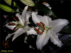 *Floral...weekend* (MONKEY50) Tags: lily art digital pentaxart colors white green spring 172017 easter floral nature flickraward mixofflowers musictomyeyes autofocus pentaxflickraward contactgroups exquisiteflowers macroelsalvador beautifulphoto top25naturesbeauty