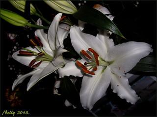 *Floral...weekend*