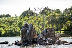 Jinja-H18_6360 (Carl LaCasse) Tags: uganda jinga lakevictoria nile river source people smile birds fishishing sunset beauty