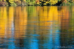 Reflecting on Autumn (Michael Guttman) Tags: reflections river water fallcolors autumncolors skinnerbuttepark eugene oregon willametteriver reflection golden colorful waterreflections nikon d90