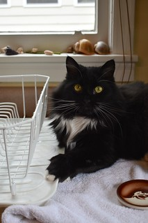 I can has dish drainer?