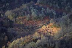 The Telegraph (J McSporran) Tags: scotland trossachs lochlomondandtrossachsnationalpark benaan lochkatrine telegraphpoles landscape canon6d ef70200mmf28lisiiusm