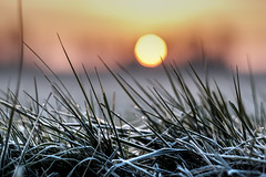 Sunrise on a cold morning (Wouter de Bruijn) Tags: fujifilm xt2 fujinonxf56mmf12r sunrise dawn morning frost frozen water grass bokeh depthoffield nature landscape sun light bokehballs walcheren zeeland nederland netherlands holland dutch outdoor