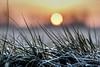 Sunrise on a cold morning (Wouter de Bruijn) Tags: fujifilm xt2 fujinonxf56mmf12r sunrise dawn morning frost frozen water grass bokeh depthoffield nature landscape sun light bokehballs walcheren zeeland nederland netherlands holland dutch outdoor