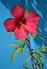 Ликующий (Tutchka) Tags: морекилометров край краснодарский розовый сад солнце цветок юг яркость