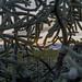 Cactus Labyrinth at Dawn