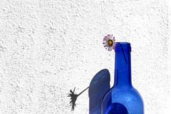 La primavera in bottiglia (meghimeg) Tags: 2018 lavagna bottiglia bottle daisy margherita pratolina blu blue ombra sole shadow sun