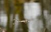 Relaxing (Jan-Willem Adams) Tags: adamsphotography gelderland kikker lente nature natuur nederland zonneland vijver garderen nl