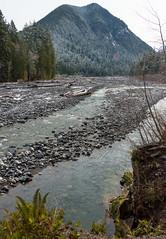Carbon River (Dan Hershman) Tags: mtrainiernationalpark rainforest carbonriver