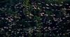 Rush hour. (HIromi Kano) Tags: japan izunuma miyagi kurihara tome eaafp ramsarconvention wildbird wildlife wildgoose nature animal 日本 伊豆沼 宮城県 登米市 栗原市 マガン 自然 野鳥 ラムサール条約 ngc