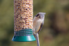 Tufted Titmouse, March 2018 (marylea) Tags: mar24 2018 birds titmouse tuftedtitmouse birdfeeder bird washtenawcounty michigan