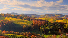 Undulating hills (Bernhard Sitzwohl) Tags: hills alpineforeland fall autumn colours vibrant ouotdoor nature countryside hillcountryside vinery styria southernstyria landscape trees forest greatphotographers