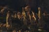 Hamalayan Griffon Vulture. (Noor Hussain.) Tags: wildlifeofpakistan wildlife wwf wild white winter birdsofpakistan bbc bird blue bukkeh beak art air animal common contrast dof depthoffield detail disk eyes eagleowl earlymorning perfect feather firstraysoflight face fauna flower facial grey great himalayan habitat hills himalaya holiday iucn indus jungle sky pakistan nikkor nikon landscape light mountains nature natgeo noorhussain ngc noor national outdoor owl wildbird wildowl texture yellow hibou gyps rock grass tree forest