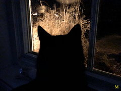 CAT IN THE MOONSHADOW (Cabinet of Old Secret Loves) Tags: cat moon shadow moonshadow black kitten rescue m photoshoot photoshooting art photography night dark window