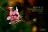 Daily Haiku: Ballerinas - 094/365 (James Milstid) Tags: dailyhaiku haiku haiga poetry jemhaiku ballerina ballet tutu