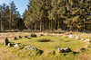 Soussons Cairn Circle, Dartmoor (Keith in Exeter) Tags: stone circle cairn dartmoor neolithic archeaological standingstone grass field moor nationalpark forest tree landscape devon
