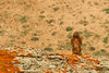 Marmot (Jay Perry) Tags: ynp yellowstone marmots marmot yellowstonenationalpark wildlife